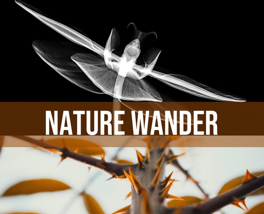 Nature Wander